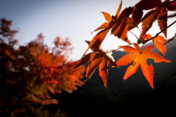 秋の登山もみじ