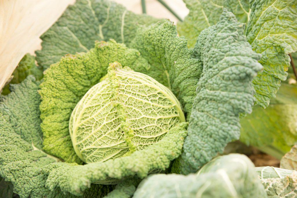 キレドの野菜_01