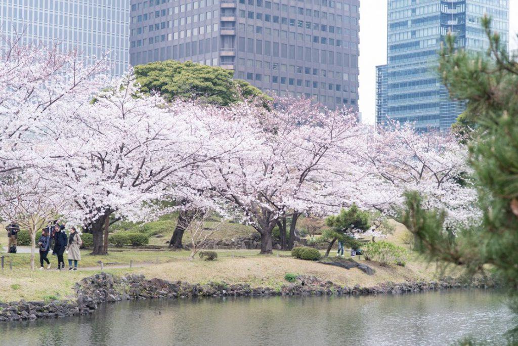 桜ウォーク2019_06