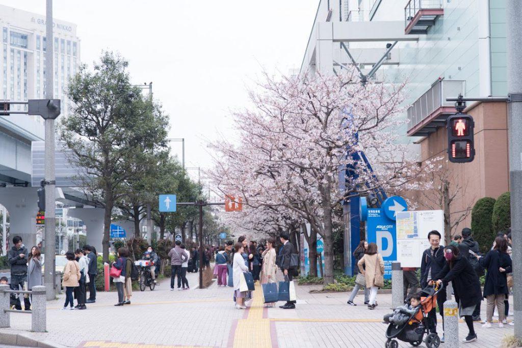 桜ウォーク2019_09