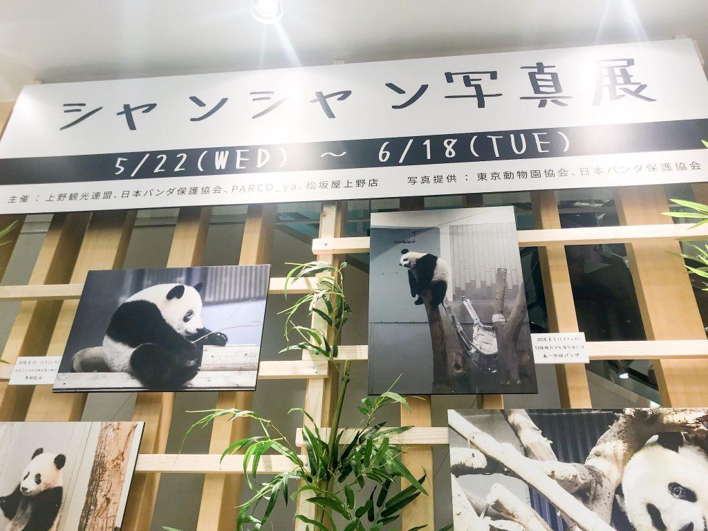 上野松坂屋_シャンシャン展_01